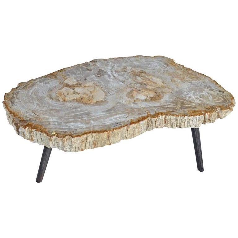 Umstead Oval Engineered Wood Coffee Table: Andrianna Shamaris Light Toned Petrified Wood Coffee Table
