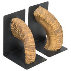 Pair of Ram Horn Bookends