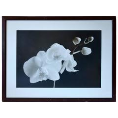 Sepia Orchid Print
