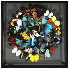 Stunning Colorful Composition of Framed Butterflies by Olivier Viol