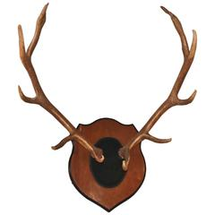 Large Mounted Antler Rack