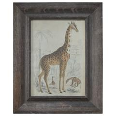 Original Antique Print of a Giraffe, 1835