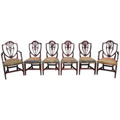 Set of Six American Mahogany Shield Back Dining Room Chairs, N.Y, Circa 1820