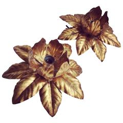 Pair of Italian Gilt Metal Flower Wall Sconce