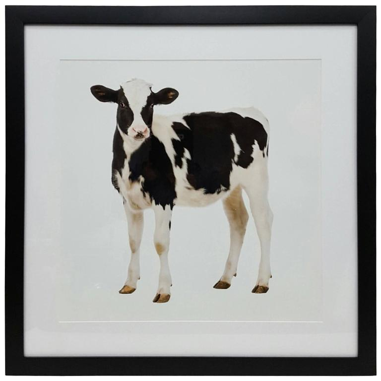 Cow Print in Black Frame