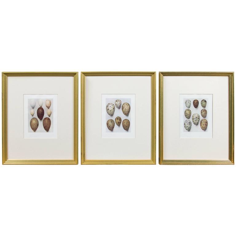 Set of Three Framed Bird\'s Eggs Lithographs, England, circa 1900, H ...