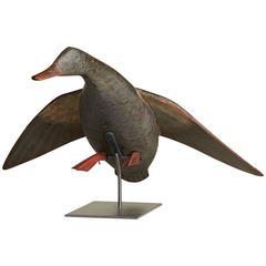 Flying Mallard Hen Decoy Attributed to Gus Wilson
