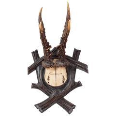 19th Century Habsburg Roe Deer Black Forest Trophy from Eckartsau Castle Austria