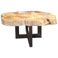 Petrified Wood Slab Coffee Table with Steel Base