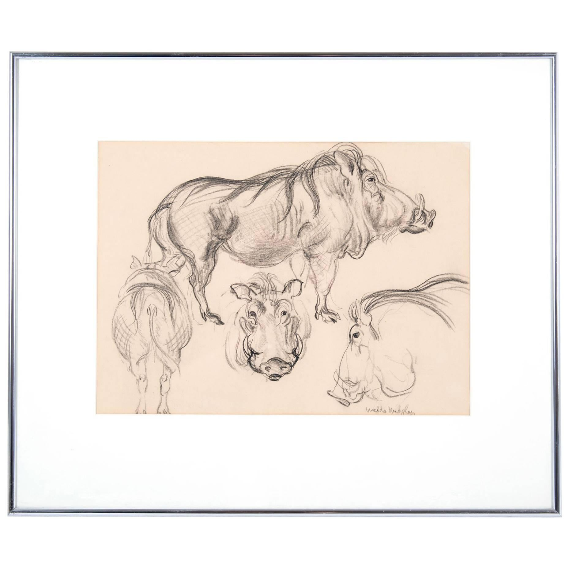 Boar Study by Waldo Midgley, 1993