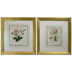 Pair of Antique Mixed-Media Floral Botany Watercolor Paintings, Rose Studies