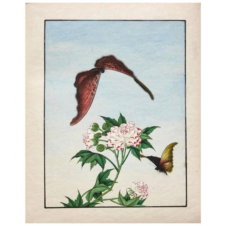 Set of 12 Chinese Export Botanical Watercolors 1