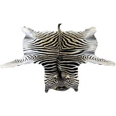 Large High Quality Burchell Zebra Hide Rug Well Marked and Great Color
