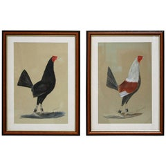 Pair of Early 20th Century English Fighting Cockerel Paintings