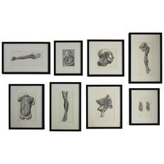 Set of Eight Anatomical Lithographs after Albrecht Von Haller