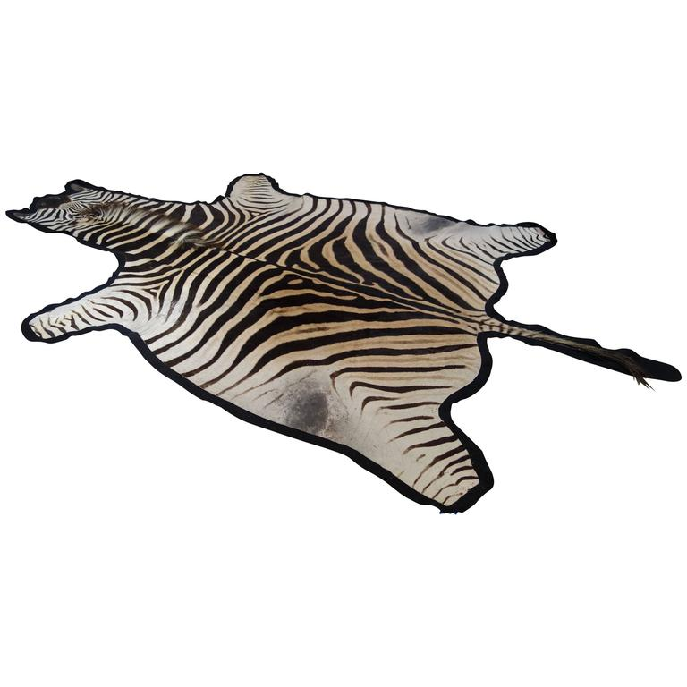 Large and Graphic New Burchell's Zebra Skin Hide in Black, Cream and Sand
