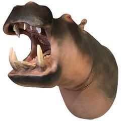 Lifelike Replica of a Hippopotamus