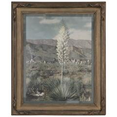 1920s Large-Scale Hand Tinted Photograph of the Desert and Yucca