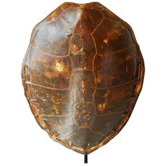 Early 20th Century Giant Tortoise Shell from South America