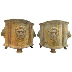 Pair Cast Iron Neoclassical Style Lion Mask Planters