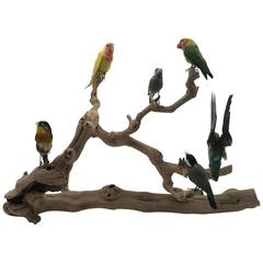 Perched Taxidermy Lovebirds