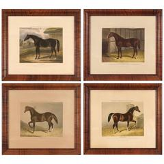 Group of Four Colored Engravings of Sheldon's Celebrated Racing Sires