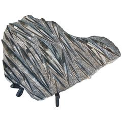 Large Grey and Black Orthoceras Fossil Sculpture on Stand