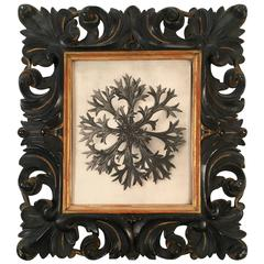 Karl Blossfeldt Plant Photogravure in Carved Leaf Frame