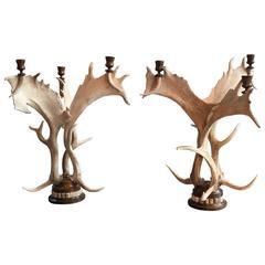 Pair of Impressive Stag Antler Candelabras
