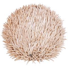 Tropical Sea Urchin Table Lamp