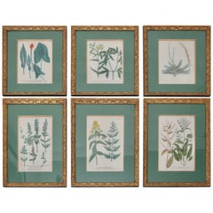 Set of Six 18th Century Hand-Colored Botanicals Prints