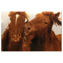 "Roberto Duteusco ""Love Bite"" Sable Island Wild Horse Chromogenic Print"