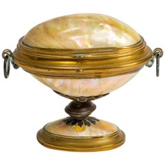 19th Century English Shell Box