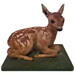 Mid-20th Century Small Taxidermy Fawn on Green Painted Plinth