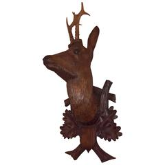 19th Century Austrian Black Forest Hunting Trophy with Deer Head