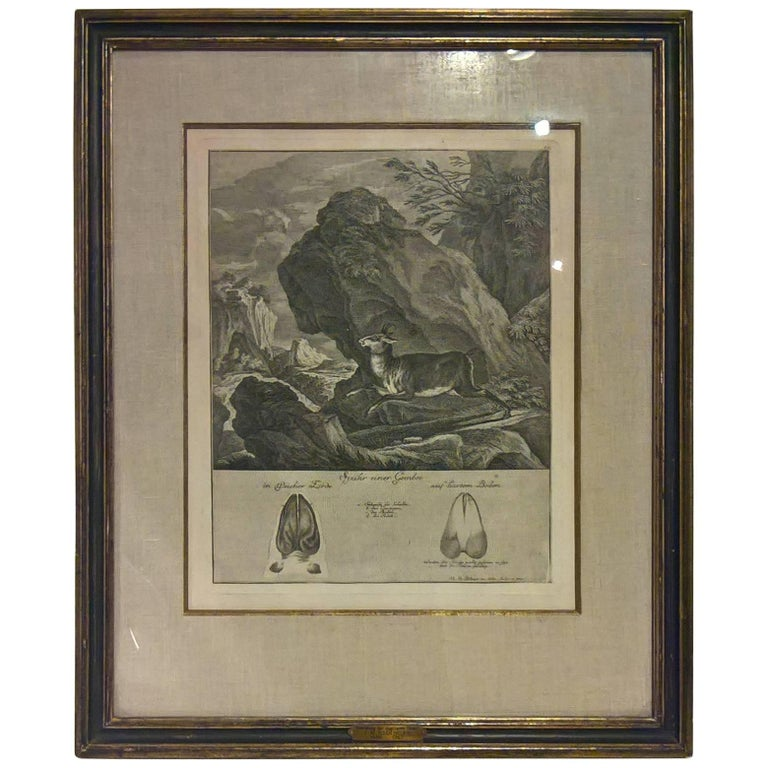 18th Century German Black Forest engraving by Johann Elias Ridinger For Sale