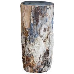 Rare Fossilised Wood Plinth