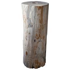 Fossilised Wood Plinth