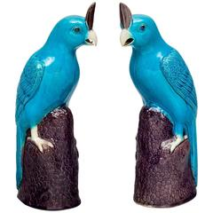 Pair of Chinese Turquoise Cockatoos
