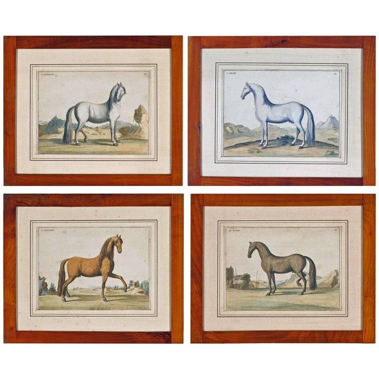 Antique Horse Prints by Baron D'Eisenberg, circa 1747 For Sale