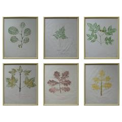 Set of Six Naive Botanical Prints 'Leaves', circa 1830