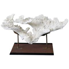 Large Vintage White Coral Specimen on Custom-Made Iron Stand