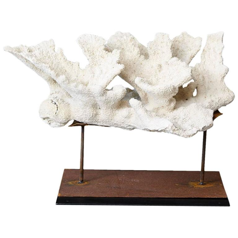 Large Vintage White Coral Specimen on Custom Made Iron Stand II 1