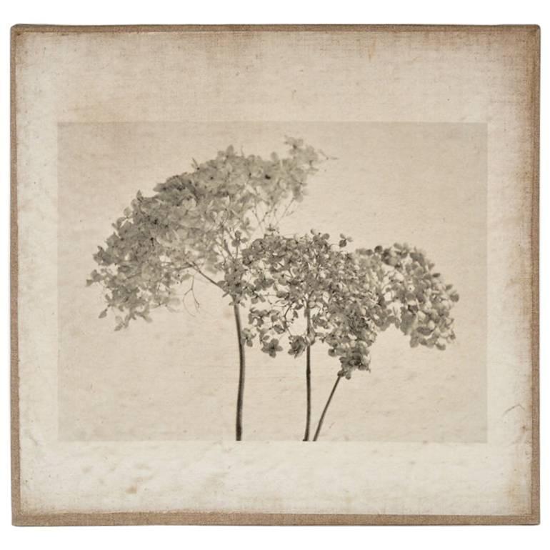"Contemporary Photographic Print Titled ""Hydrangeas #4"""