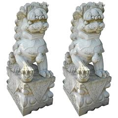 Impressive Pair of Marble Chinese Foo Dog Statues