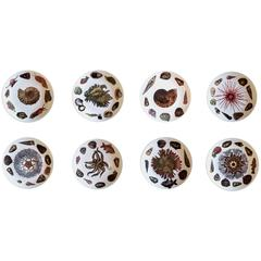 Piero Fornasetti Rare Dishes Decorated With Sea Anemones, Urchins & Shells