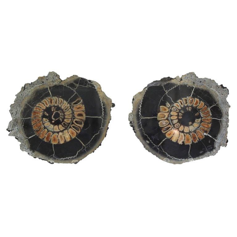 Ammonite Discs, Pair For Sale