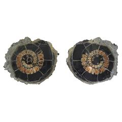 Ammonite Discs, Pair