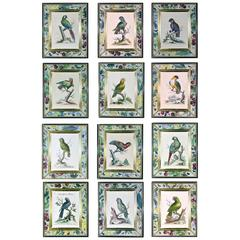 George Edwards Hand-Colored Set of 12 Engravings of Parrots, 1743-1764