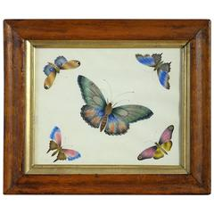 Mid-19th Century Watercolour of Butterflies